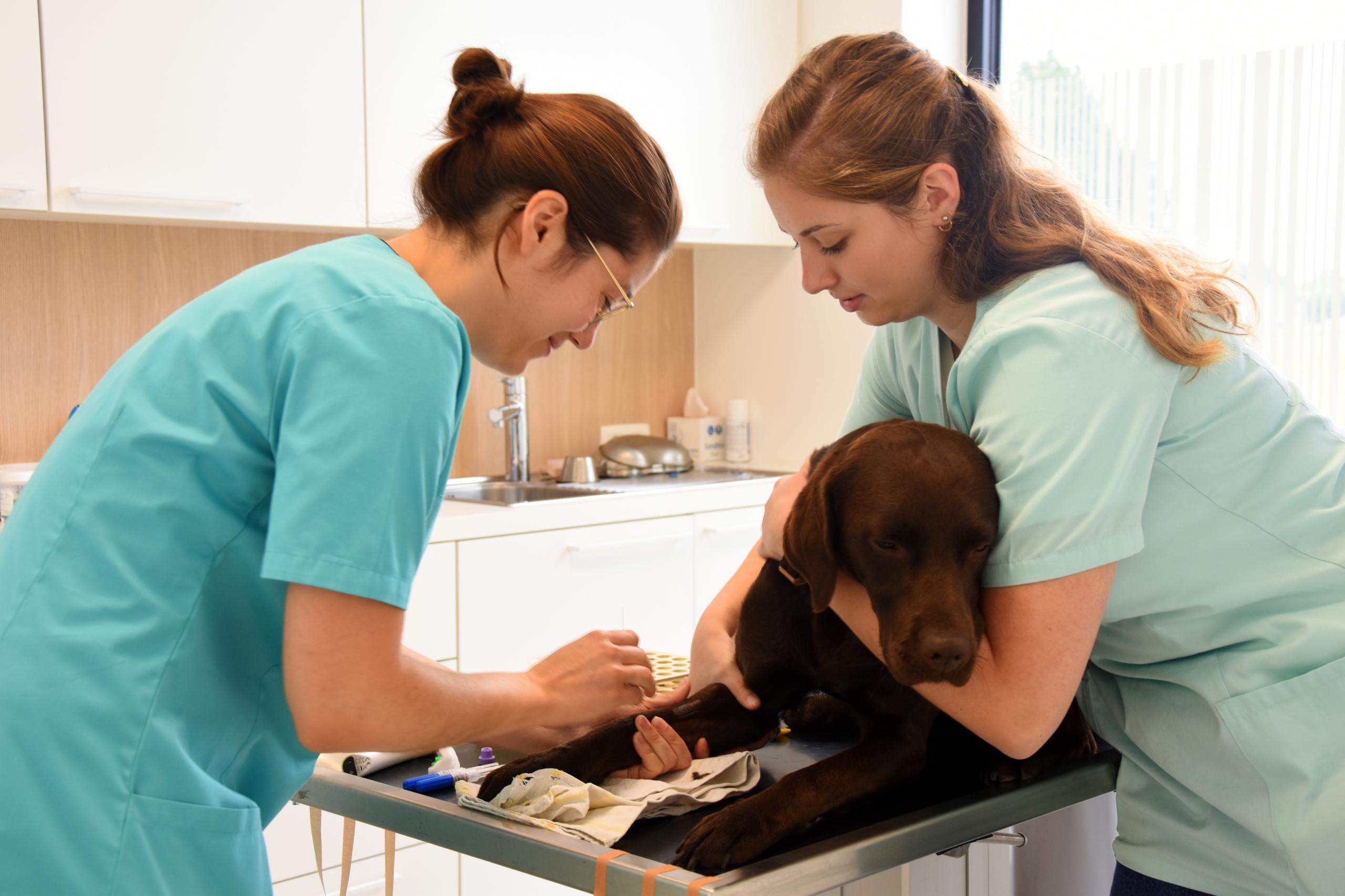 dierenartsencentrum dier-en-vriend te Ruddervoorde de consultatie