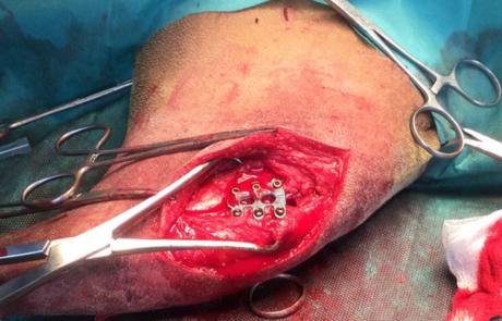 dierenartsencentrum dier-en-vriend te Ruddervoorde orthopedische chirurgie